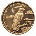 Sokół wędrowny (łac. Falco peregrinus)